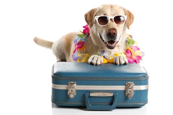 Dog boarding services camp k nine middletown nj