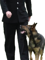 Executive /Personal Protection Dogs.