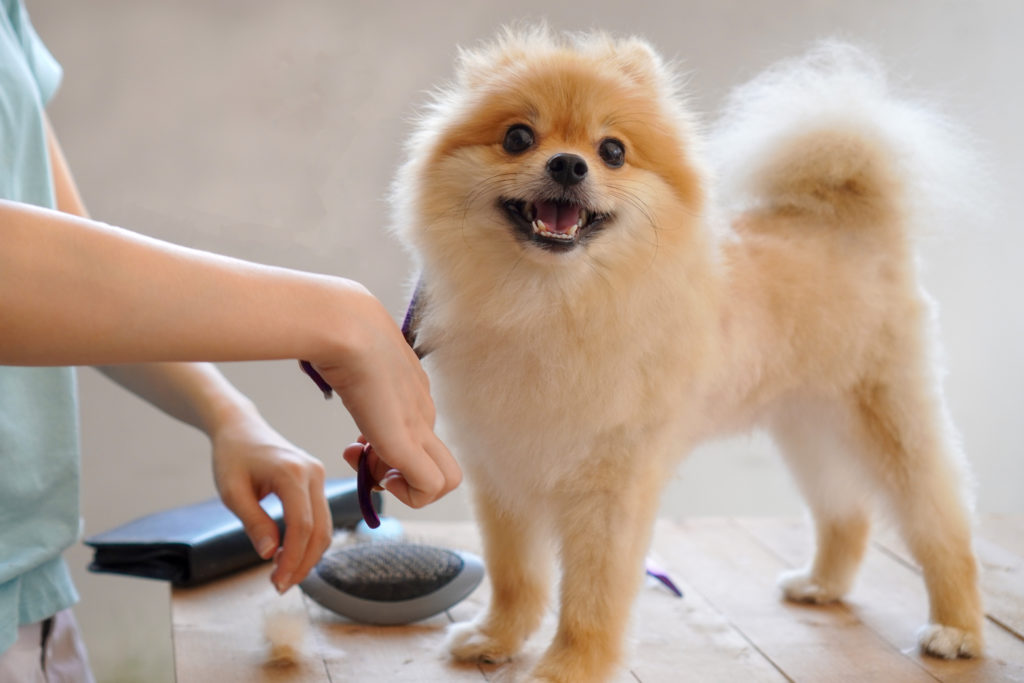 Dog grooming middletown nj